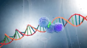 PARP Inhibitor Broadly Active in Ovarian Cancer
