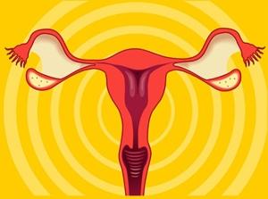 Ovarian Cancer Stem Cells: Unraveling a Germline Connection